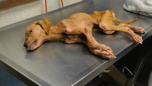 Dit hond werd door een familie gered, zo'n grote dankzegging vrwachtten ze niet!