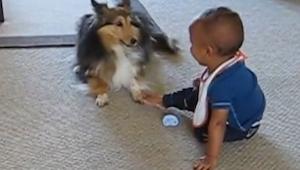 Niemand geloofde hem dat hun hond zoiets met hun kind doet. Hier het bewijs