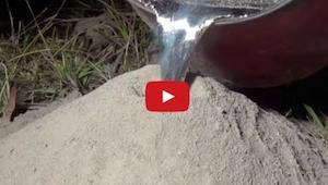 Hij heeft gesmolten metaal in een mierenhoop gegoten, als je ziet wat er gebeurt