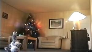 Ze plaatsten een camera in de woonkamer. Binnen enkele minuten nam deze iets afs