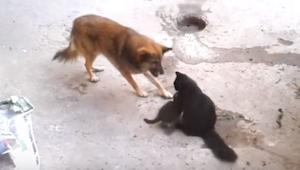 Ongewoon, een hond benadert een poes met kittens, een mooie zeldzame gebeurtenis