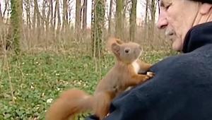 Het eekhoorntje klom op zijn schouder, let op haar pootjes..