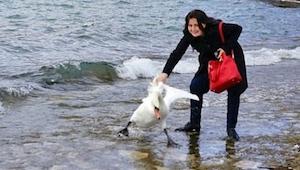 Zij besloot op de foto te gaan met een zwaan, het resultaat is tragisch…