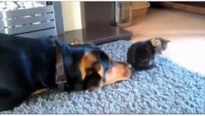 Deze hond wou zo graag vriendjes worden met de kat, dat… je valt om van het lach