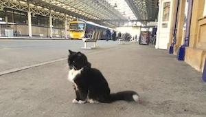 Een kat was 9 maanden dakloos. Nu brengt hij hele dagen door op het stationsperr