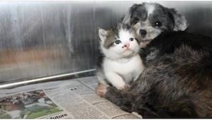 Ze vonden een dakloze hond, verborgen in de struiken. Ze konden niet geloven wat