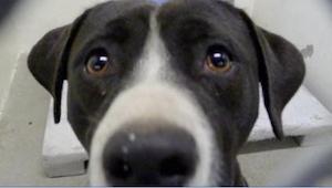 Hoe deze hond reageerde toen hij begreep dat hij geadopteerd werd, is schitteren
