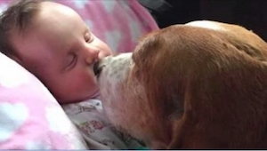 Hun dochtertje lag op sterven. Wat hun honden deden, verbaasde de hele familie.