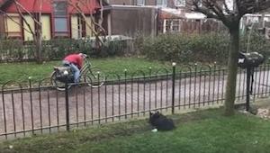 Een hond verveelde zich alleen in de tuin... Daarom bedacht hij een geniaal spel