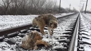 Deze honden lagen op het spoor. Toen er een trein aankwam, vreesde ik het ergste