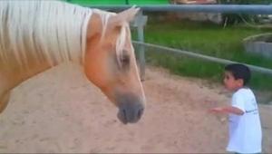 Een jongetje kwam gevaarlijk dichtbij de poten van een paard. Wat zijn moeder fi