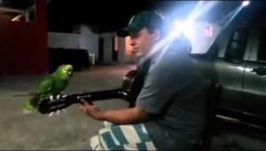 Deze opname van een zingende papegaai gaat viral. Dit móet je zien!