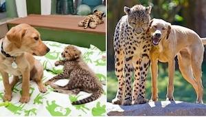 20 foto\'s van dieren die samen zijn opgegroeid en... ondanks al die jaren niets