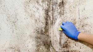 Giftige zwarte schimmel - de vijf meest voorkomende tekens dat je het thuis hebt