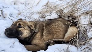 Tieners ontdekten een hond die trilde van de kou en even later kwamen ze erachte