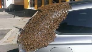 2 dagen lang achtervolgde een zwerm bijen de auto van deze vrouw. De reden werd