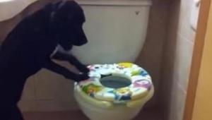 Een baasje filmt stiekem zijn hond wanneer deze de badkamer in rent. Op 16 sec.