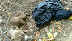 Een vrouw vond een hond in de vuilnisbak. De politie was geschokt toen bleek wie
