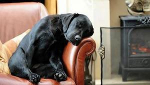 Een man adopteerde een hond die een brief bij zich had van de vorige eigenaar. D