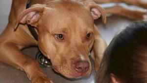 Wat betekent het wanneer jouw hond tegen je opspringt of je diep in de ogen kijk