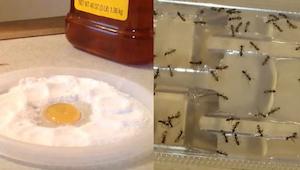 Nooit meer kakkerlakken, vlooien en mieren in huis. Dit ene simpele middel volst
