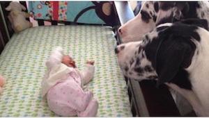 Wat gebeurt er wanneer je een baby alleen achterlaat met een hond? Kijk zelf!