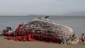 Ze dachten een dode walvis op het strand lag. Toen ze zagen wat erin lag, konden
