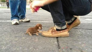 Hou je van puppies? Dan is dit iets voor jou!