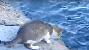 Ik dacht dat deze kat in het water zou springen, maar wat hij deed, verbaasde me
