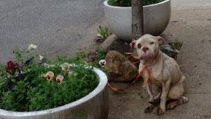 Een postbode merkt een verwaarloosde hond die vastgebonden is aan een boom - dan