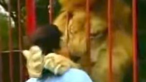 De vrouw kwam gevaarlijk dicht bij de leeuwenkooien. Wat erna gebeurt, heeft me