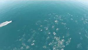 Een man filmt de oceaan met een drone. Wat hij filmt is ongelooflijk!