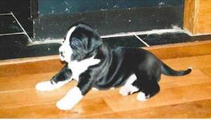 Een koppel nam een puppy. Vijf maanden later konden ze hun ogen niet geloven!