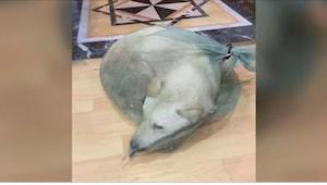 Deze hond zou voor vlees moeten worden verkocht. Gelukkig aarzelde een man niet