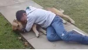 Een hond was 8 maanden gescheiden van zijn 11-jarig baasje. Zijn reactie wanneer