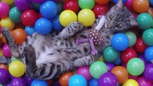 Beste video van de week - een kat en zijn ballenbad.
