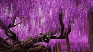 16 van de mooiste bomen van over de hele wereld.