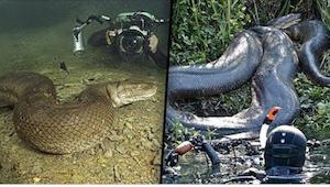 6 eng foto's van een anaconda gemaakt door een duiker ...
