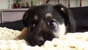 Deze pups dienen hun baasjes van antwoord - en we kunnen niet stoppen met lachen