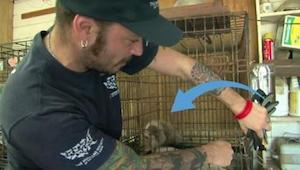 De hond werd zijn hele leven in zijn kooi gehouden - met zijn transformatie kree