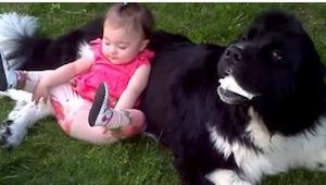 Het meisje zit naast een grote hond , en heeft onmiddelijk een levend kussen!