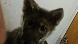 De man adopteerde een puppy . Enkele maanden later realiseerde welke blunder hij