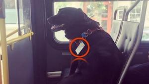 Mensen werden woedend als ze een hond op de bus zien die achtergelaten is door z