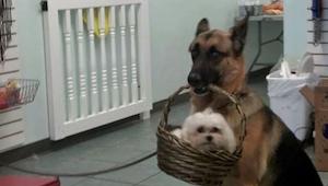 Deze baasjes hebben het vreemdste gedrag van hun honden gefotografeerd - en we k