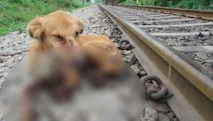 Spoorwegarbeiders vonden een hond met gebroken benen - dan moest ze een moeilijk