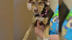 De adoptie van deze hond leidde tot de arrestatie van zijn buren voor kindermish