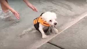 Deze hond had geen kracht in de achterpoten. Dankzij de steun en hulp van liefhe