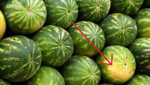 5 tips over hoe je de perfecte, rijpe en zoete watermeloen kan kiezen!