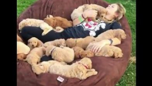 Waarschijnlijk is dit voor elke hondliefhebber dit een paradijs .