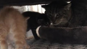 Oude kat met traumatisch verleden kan nog steeds niet door zijn baasjes gestreel